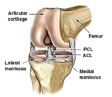 What is ACL?